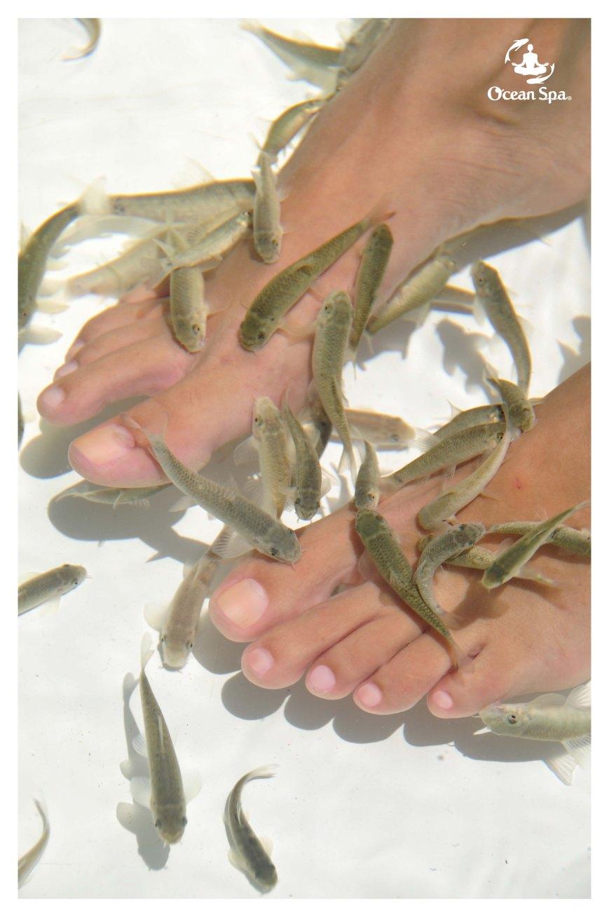 634693848773099660_garra rufa feet exfoliation