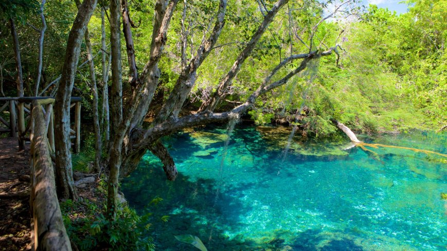 116829-indigenous-eyes-ecological-park